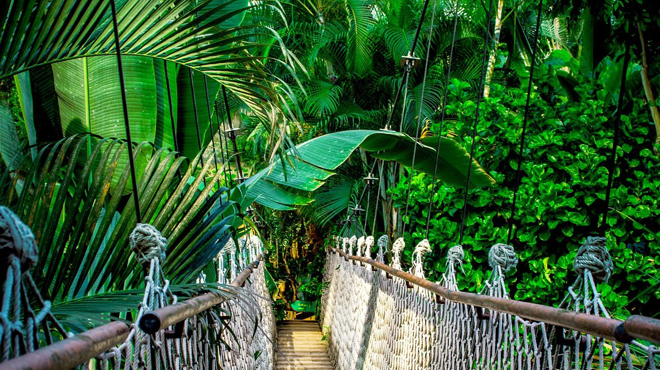Most w lesie równikowym