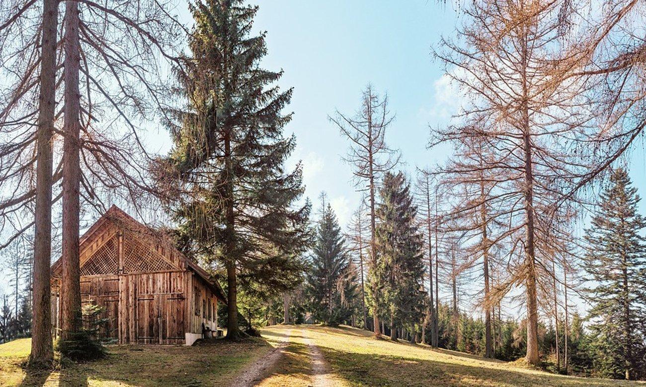 Dom w głębi lasu lifestyle