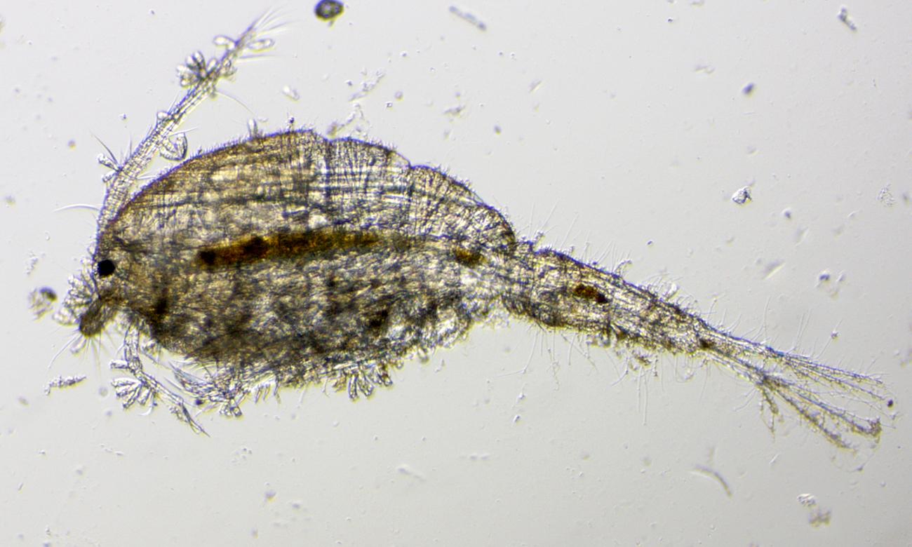 obserwacja mikroskopowa