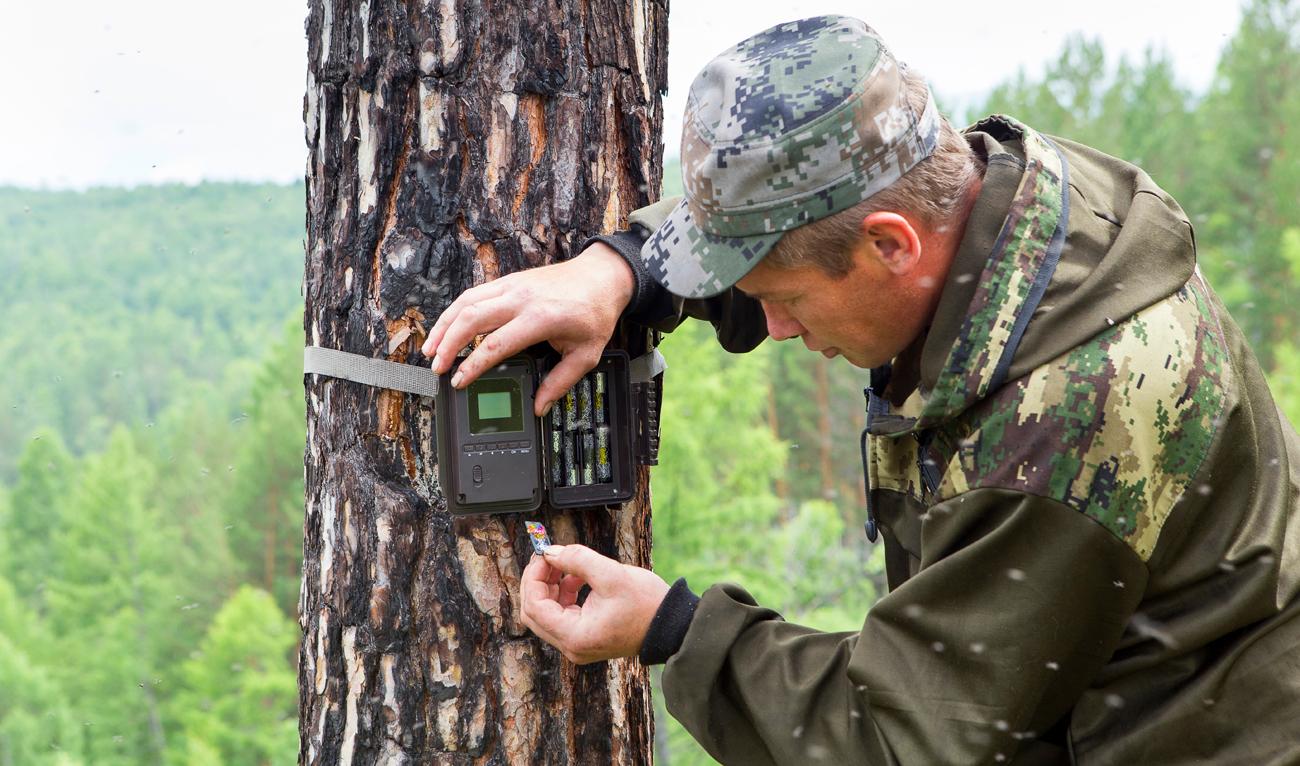 Fotopułapka na drzewie