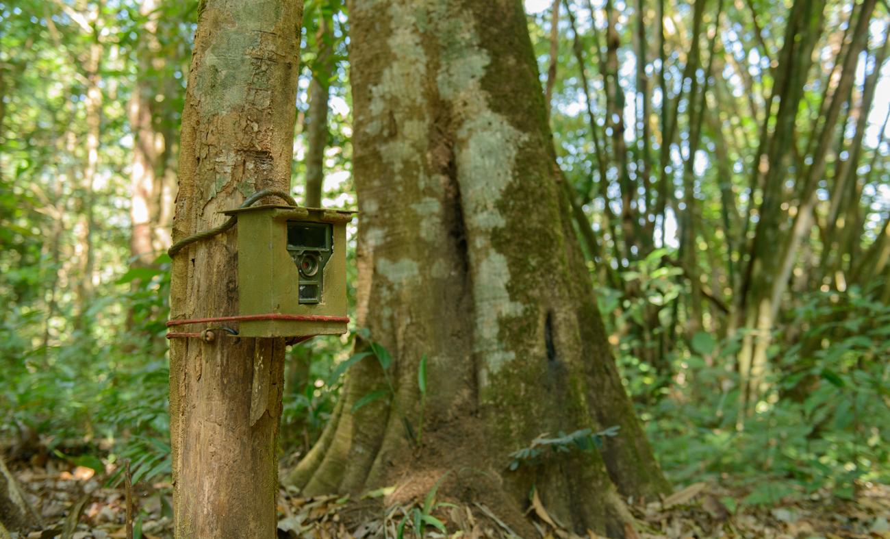 Fotopułapka zamocowana w lesie