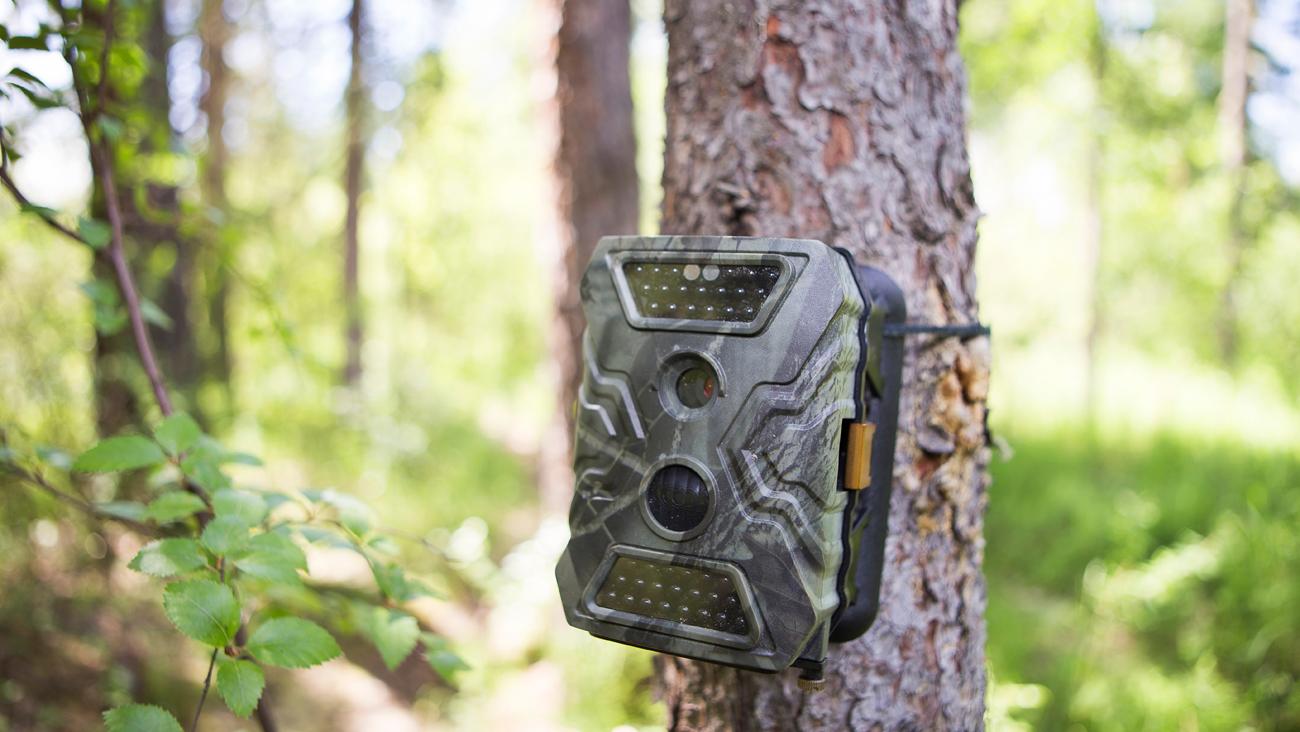 Fotopułapka fotograficzna na drzewie
