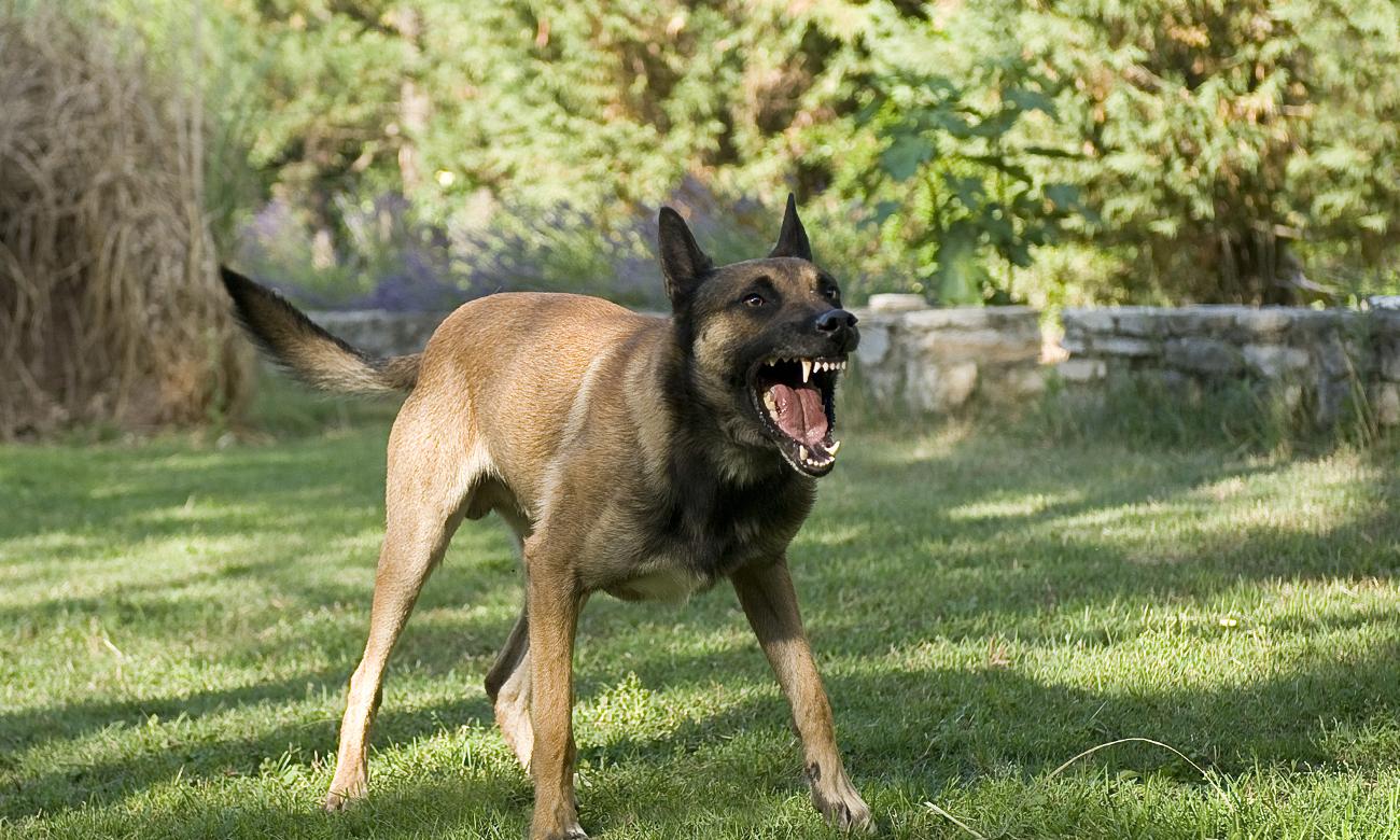 Niebezpieczny i agresywny pies w parku