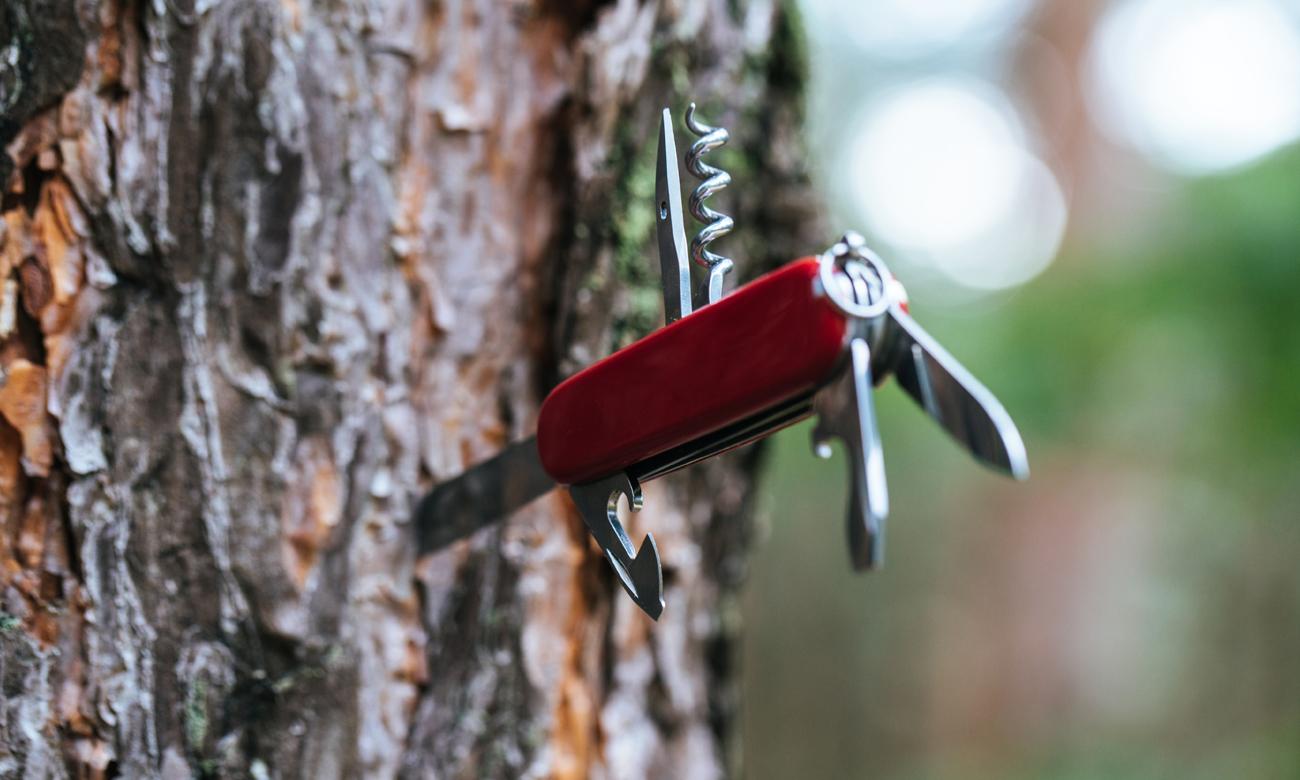 Scyzoryk Victorinox wbity w drzewo